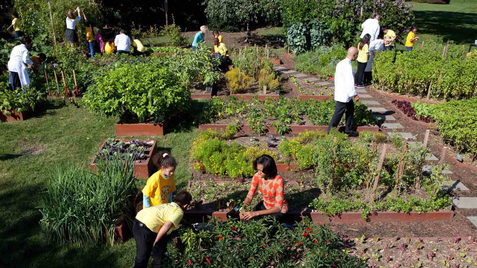 White House Kitchen Garden Michelle OBAMA